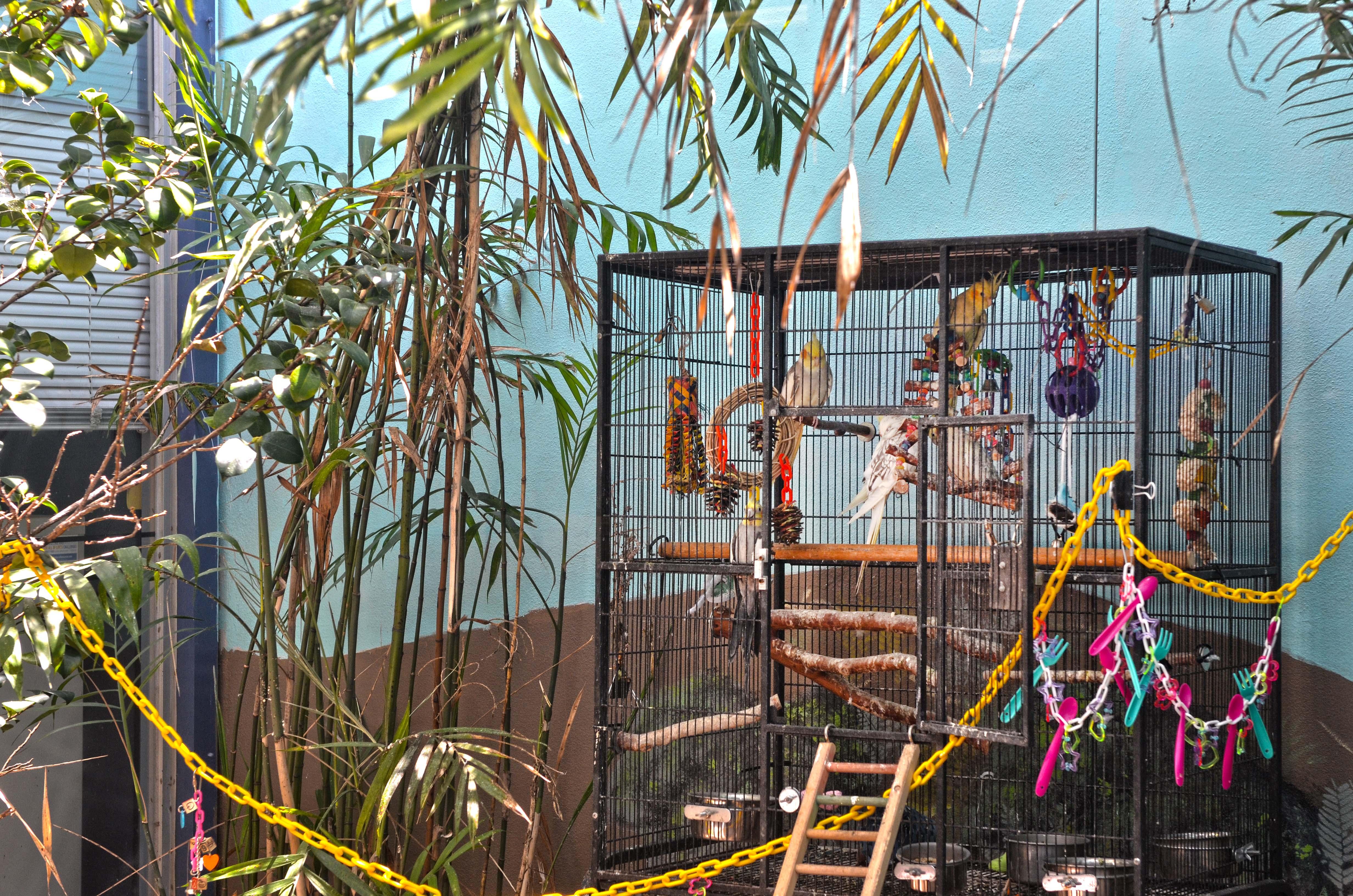 bird-atrium
